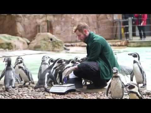 Time to weigh in at ZSL London Zoo