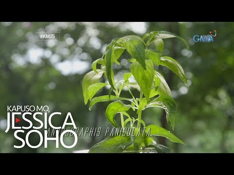 Kapuso Mo, Jessica Soho: Serpentina, nakagagaling nga ba?