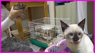 おデブのファンシーラットと子猫に冬越しグッズをプレゼントした結果......