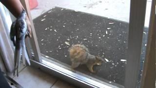 Screwy Squirrel Wants a Peanut