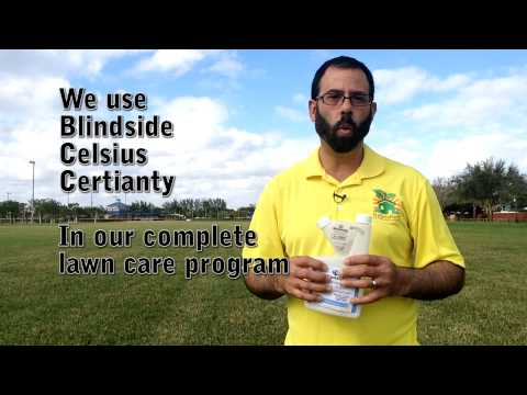 St Augustine Weed Control Miami 786-222-7069
