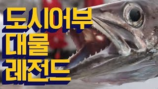 도시어부 레전드 대물 모음 영상! 이런 물고기 본 적 있음?_채널A 도시어부