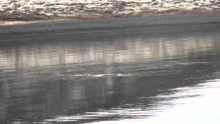 "Fly fishing in Iceland ""Gudmundur goes fishing 1"""
