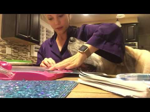 dog-vlog---late-night-crafts-with-a-giant-dog