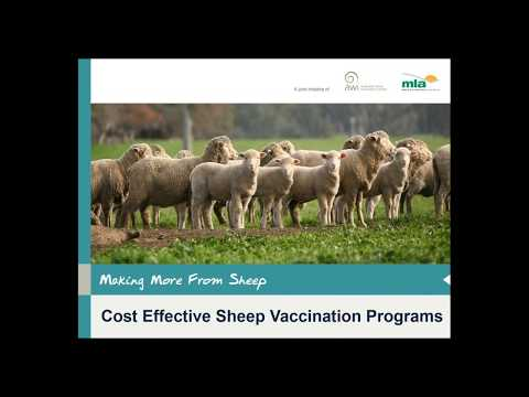 Making More from Sheep | Cost effective sheep vaccination programs