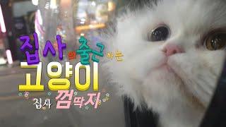 [까까캔디] 출근하는 고양이, 집사껌딱지, 마중냥이, 호기심많은고양이, 길냥이,고양이밥주기