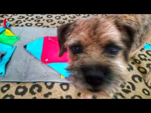 Buster Dog activity mat - hide treats and obstacles challenge