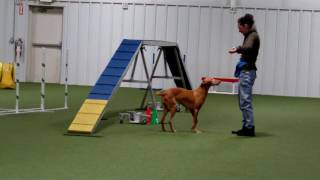 Keep watching as I stop during an agility run just to get LOVIN' fr...