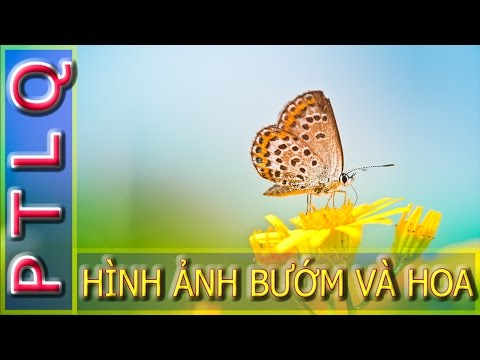 Hình ảnh động vật - đẹp lung linh của bướm và hoa