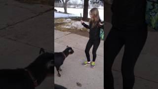 Girl Versus Goat 2