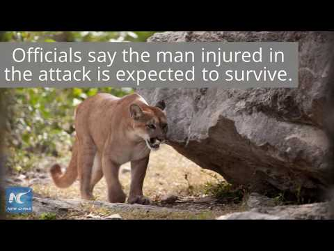 Rare cougar attack in Washington State leaves one dead, anther injured