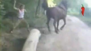 Живодер получил по лицу от лошади