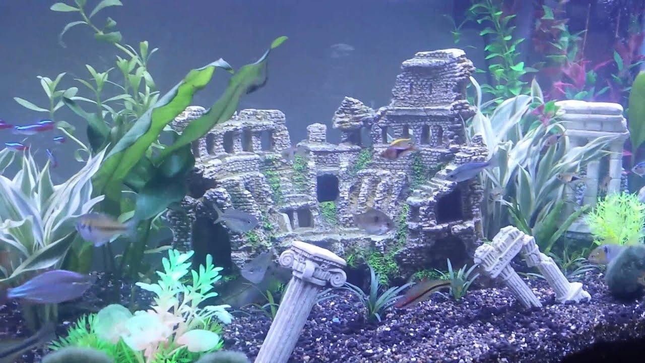 Roman Fish Tank Youtube