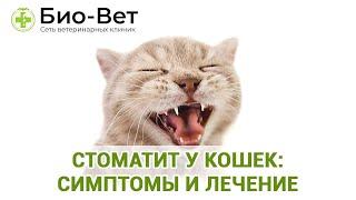 Стоматит у кошек: симптомы и лечение