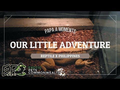 Download Alagang Magaling S9 Ep3 Reptile X Exotic Pets Showcase MP3