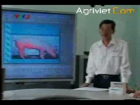 Bệnh gia súc gia cầm