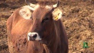 управлением Россельхознадзора ведутся проверки молочно-товарных ферм в Брянской области