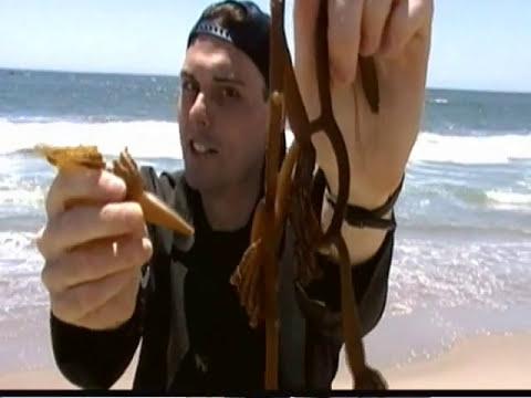 Marine Biome Video (Intertidal Zone, Reefs, Open Ocean, Deep Sea) SCIENCE  EXPERIMENT