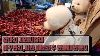 물고기, 미꾸라지, 매운고추등 재래시장에서의 강아지반응…