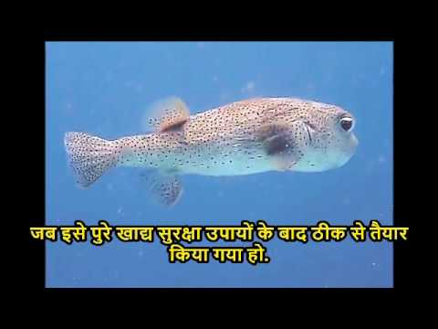 10 most poisonous animals in the world  hindi