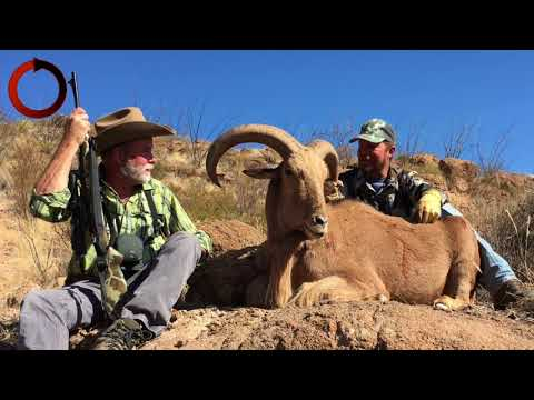 Tips for hunting free range aoudad.