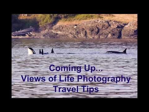 Travel Tips --  San Juan Island -- Orcas -- Killer Whale -- Photography -- How to Find Accomodations