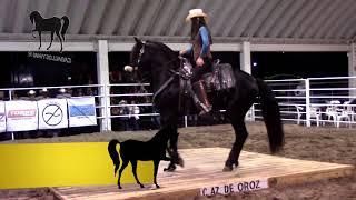 Kamila bailando su caballo warlander Indio Enamorado