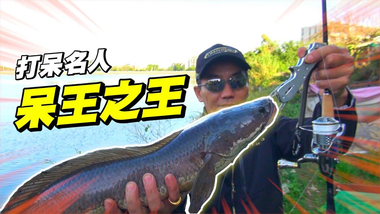 就是要挑戰冬天打呆! 呆王游大師的冬天釣泰國鱧攻略無私傳授~ - YouTube