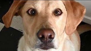 噓でしょ?犬VSカンガルーの命を懸けたガチバトル!! 【おもしろ】 Bes...