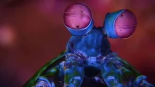 ВЕРСУС! РАК-БОГОМОЛ УНИЧТОЖАЕТ КРАБОВ! Рак богомол против осьминога