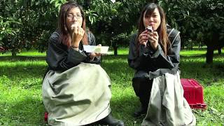 Nz Adventures: Mandarin Orange Pickers