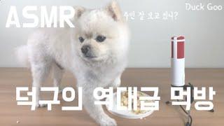 애견/역대급/레전드/ASMR/고화질/먹방/간식/덕구