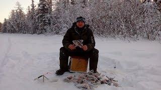 Северная рыбалка на крупного окуня Ямал 2020 15 февраля