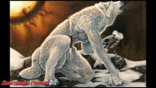 клип про оборотней и волков