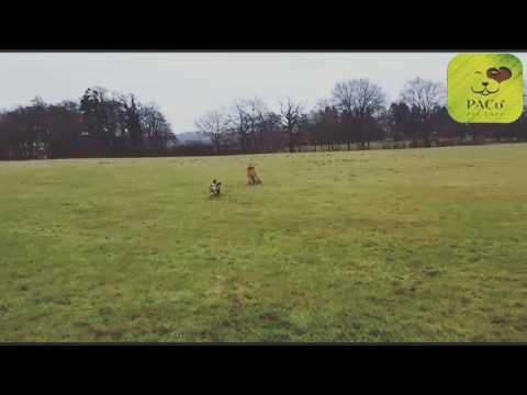 PACo Pet Care - Dog Walking, Dog Boarding & Dog Day Care - 2016
