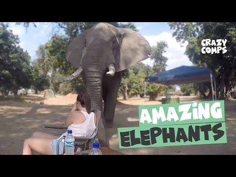 Amazing Elephant Encounters Caught on Camera