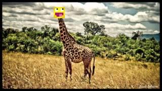 skkf karaoke - żyrafa