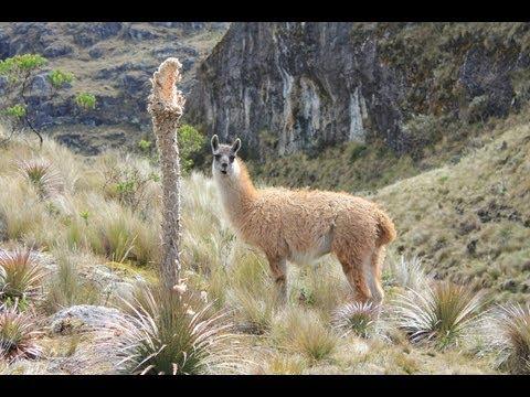 Las Cajas National Park 2013