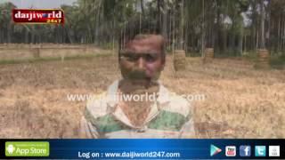 Mangaluru: New technology machine introduced for paddy cutting│Daijiworld Television