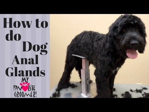 How to Express your Dog's Anal Glands