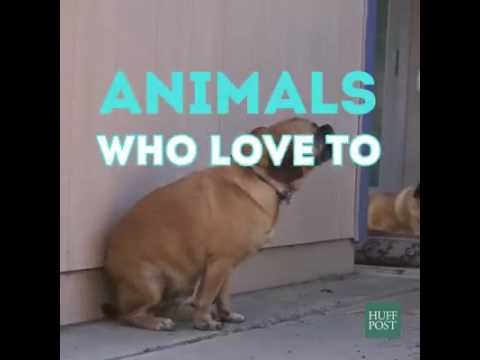 Animals' dancing on music - YouTube