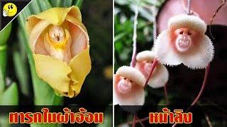 15 พืชดอกไม้ ที่ดูเหมือนสิ่งมีชีวิต (สวยปนหลอน !!) | OKyouLIKEs