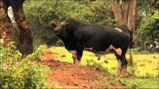 Improving African Livestock with Reproductive Technologies and Genomics