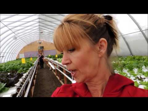 SPRING HILL FARMS SUPPLIES ORCHARDS FRESH FOOD MARKET WITH LIVING LETTUCE TROUGHS!