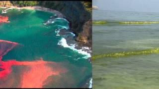 marea de algas toxicas invade costa oeste de EE.UU