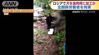 ロシアで犬を食肉用に加工か 北朝鮮労働者を拘束(19/07/16)