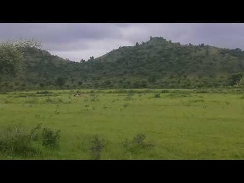 Jalgaon District forest animals
