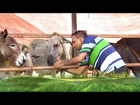 ഐടി വിട്ട് കഴുതപ്പാലിലൂടെ നേട്ടം കൊയ്ത എബിയുടെ കഥ | Donkey Farm| Nattupacha