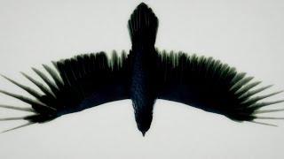 Fat Freddy's Drop Blackbird (Official Video)