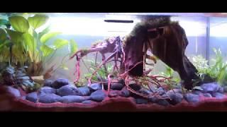 Tuto remise eau aquarium 150l d'occasion